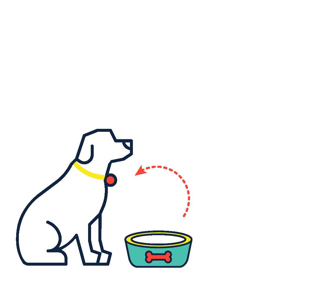 Accesorios Mascotas