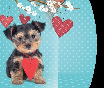 Studio Pets, Lovely Romeo