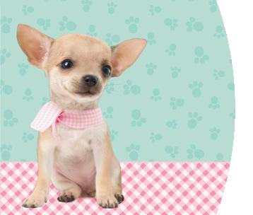 Studio Pets Pinkie